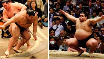ver sumo japones